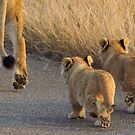 Following mom - Kruger National Park by eyedocbrian