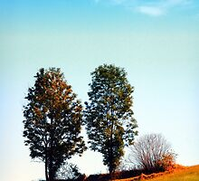 Twin trees and a bush by Patrick Jobst