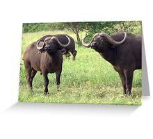 Cape Buffalo - Kruger National Park Greeting Card