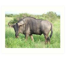Blue Wildebeest - Kruger National Park Art Print
