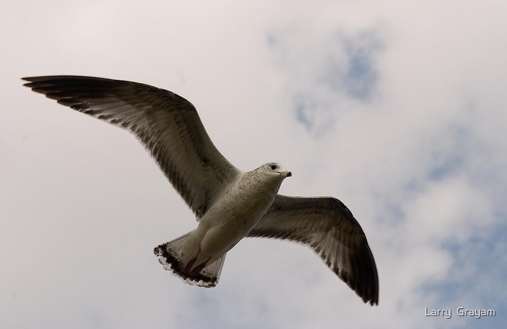 Flight by Larry  Grayam