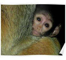 A Mother's Comfort (Patas Monkey Baby) Poster