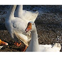 Christmas Goose Photographic Print