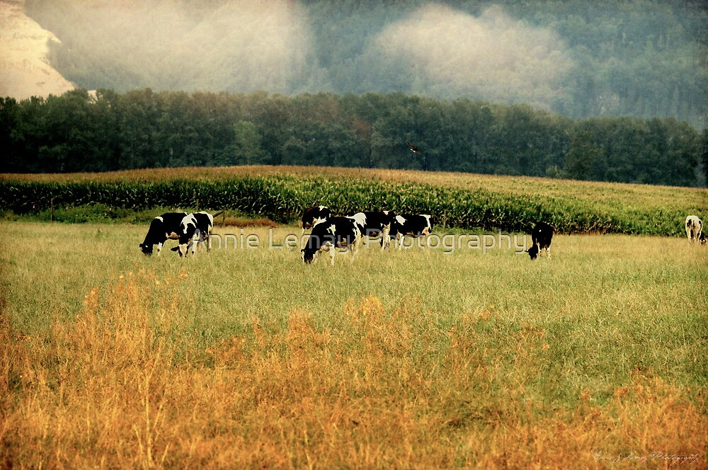 Holsteins in the Country by Annie Lemay  Photography