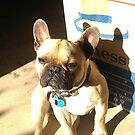 French Bulldog - Moving House by Liddle-Ideas