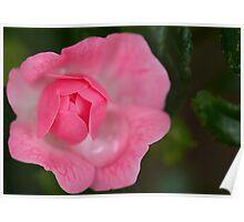Pink Capture Poster
