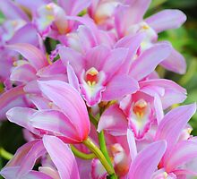 Cascade Of Pink Orchids by Kathleen Struckle