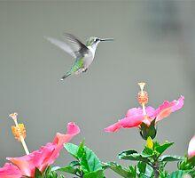The Hummingbird by NinaBees