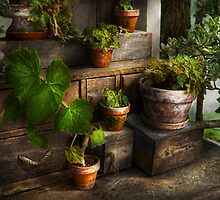 Plants - A summers soak  by Mike  Savad