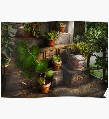 Plants - A summers soak  Poster