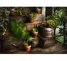 Plants - A summers soak  Photographic Print