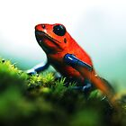 Strawberry Poison-Dart Frog by Robbie Labanowski