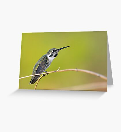 Hummer Stretch Greeting Card