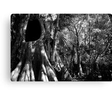 Cypress II Canvas Print