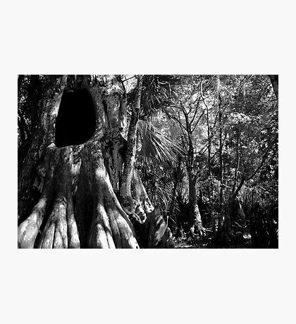 Cypress II Photographic Print