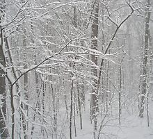 February Snow by MotherNature