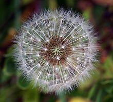 Starry seeds by Mark Maloney