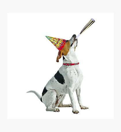 American Foxhound Birthday Photographic Print