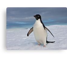 Adelie Penguin seeks Fame Canvas Print