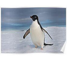 Adelie Penguin seeks Fame Poster