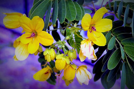 Splendid yellow flowers by ♥⊱ B. Randi Bailey