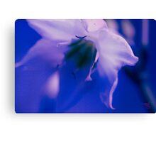 Florance -Blue Canvas Print