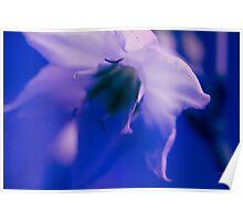 Florance -Blue Poster
