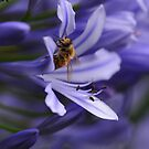 Bee in the Midst by Edge-of-dreams