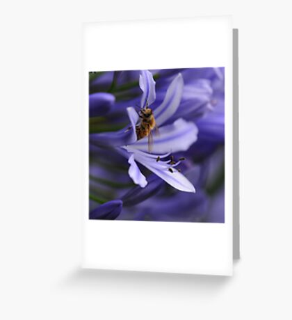 Bee in the Midst Greeting Card