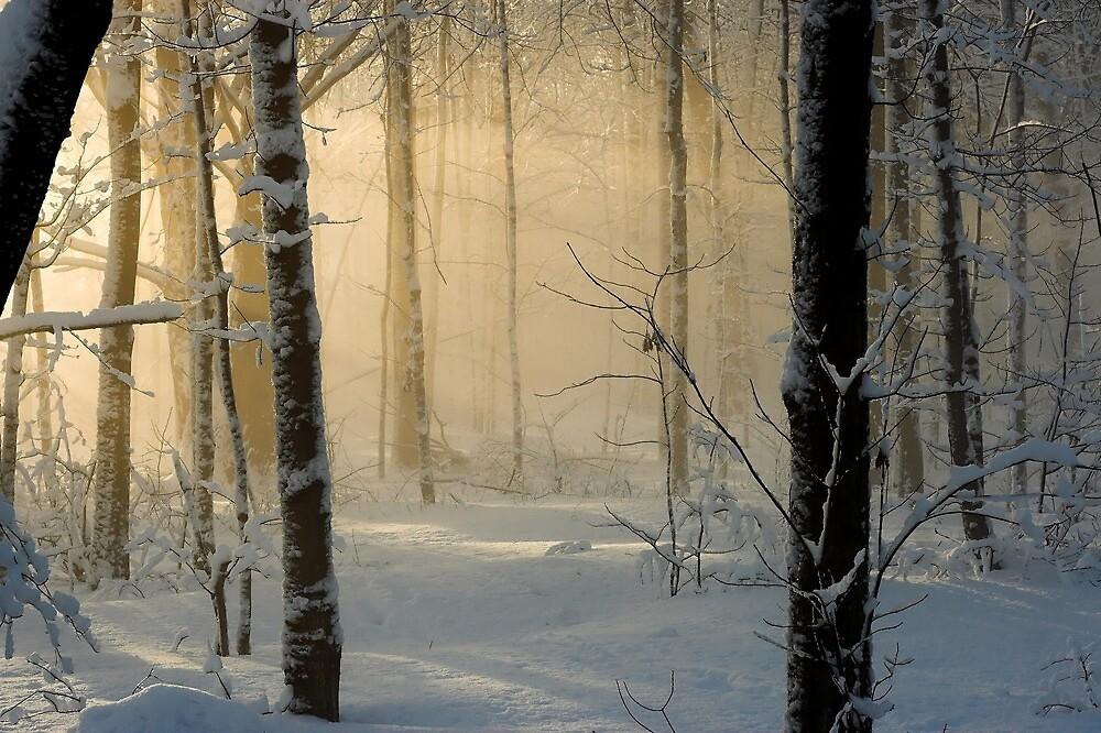 Winter Light Rays - Ottawa, Canada. by Daniel Cadieux