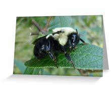 Sleeping Bumblebee  Greeting Card
