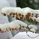 New snow.... Who cares!!!! Come on spring!!!! by Larry Llewellyn