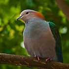 Green Imperial Pigeon by Winston D. Munnings