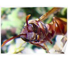 Bee gazing me Poster