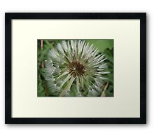 Little brushes Framed Print