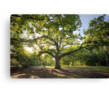 Oak Lawn Royal Botanical Gardens Melbourne Canvas Print