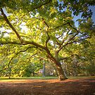Oak Lawn Royal Botanical Gardens Melbourne (warm) by Philip Greenwood