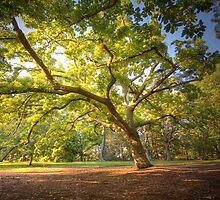 Oak Lawn Royal Botanical Gardens Melbourne (warm) by Philip Greenwood
