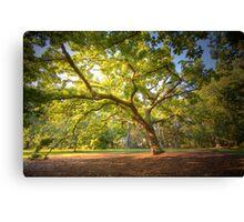 Oak Lawn Royal Botanical Gardens Melbourne (warm) Canvas Print