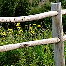 Flowers Behind The Fence by AmyAutumn