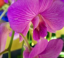Orchid by NatureGreeting Cards ©ccwri