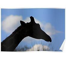 Giraffe Silhouette Poster