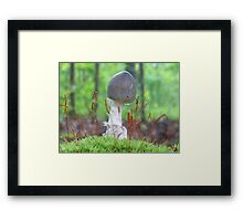 Little Sprout Framed Print