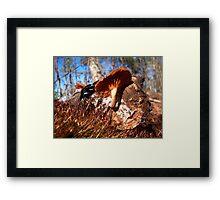 Moss and Mushroom Log Framed Print