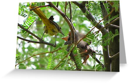 Hooded Orioles ~ Mother feeding Baby by Kimberly Chadwick
