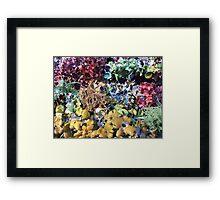 Rainbow Menagerie Framed Print