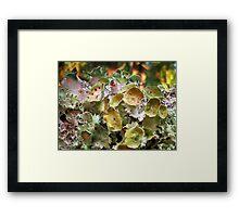 Symbiotic Splender Framed Print