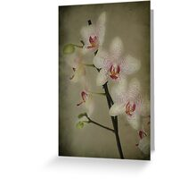 My Orchids Greeting Card
