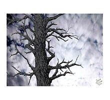 Dark Tree [Pen and Digital Illustration] by Grant Wilson