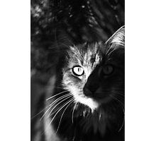 Smokey Photographic Print